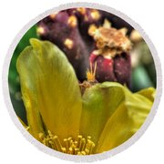 001 For The Cactus Lover In You Buffalo Botanical Gardens Series Round Beach Towel