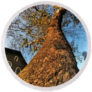 001 Oldest Tree Believed To Be Here In The Q.c. Series Round Beach Towel