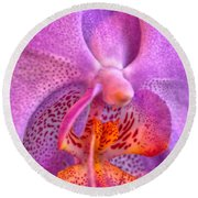 001 Orchid Summer Show Buffalo Botanical Gardens Series Round Beach Towel