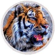 001 Siberian Tiger  Round Beach Towel