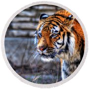 0010 Siberian Tiger Round Beach Towel