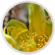 003 For The Cactus Lover In You Buffalo Botanical Gardens Series Round Beach Towel