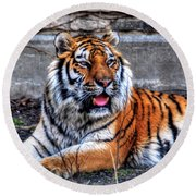 003 Siberian Tiger Round Beach Towel