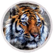 004 Siberian Tiger Round Beach Towel