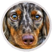0054 Puppy Dog Eyes Round Beach Towel