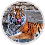 006 Siberian Tiger Round Beach Towel