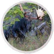 0339 Bull Moose 3 Round Beach Towel