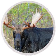 0341 Bull Moose Round Beach Towel