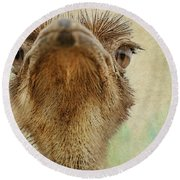 Ostrich Closeup Round Beach Towel