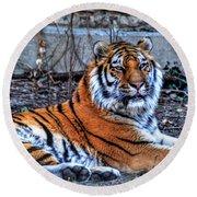 0013 Siberian Tiger Round Beach Towel