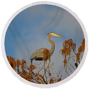 7- Great Blue Heron Round Beach Towel
