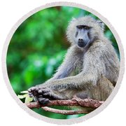 A Baboon In African Bush Round Beach Towel