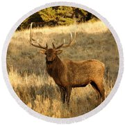 A Bull Elk In Rut Round Beach Towel