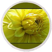 Golden Dahlia Round Beach Towel