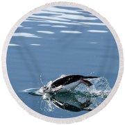A Penguin Swims Through The Clear Round Beach Towel