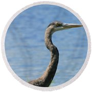 A Portrait Of A Great Blue Heron  Round Beach Towel
