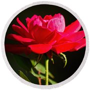 A Red Rose Round Beach Towel
