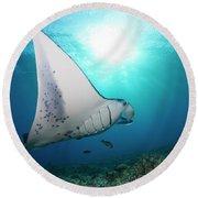 A Reef Manta Ray  Manta Alfredi Round Beach Towel