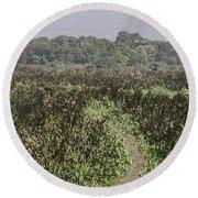 A Small Path Through Very Tall Grass Inside The Okhla Bird Sanctuary Round Beach Towel