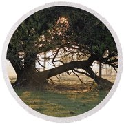 A Tree In Mississippi Round Beach Towel