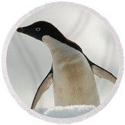 Adelie Penguin Round Beach Towel