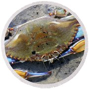 Adult Male Blue Crab Round Beach Towel