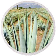 Agave Cactus Field In Mexico Round Beach Towel by Elena Elisseeva