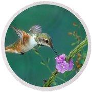 Allens Hummingbird Round Beach Towel