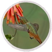 Allens Hummingbird Feeding Round Beach Towel