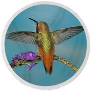 Allens Hummingbird Male Round Beach Towel