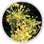 Allium Flavum Or Fireworks Allium Round Beach Towel