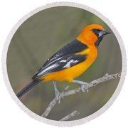 Altamira Oriole Round Beach Towel