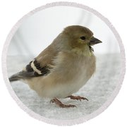 American Goldfinch In The Snow Round Beach Towel