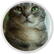 American Shorthair Cat Profile Round Beach Towel