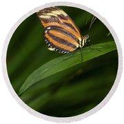 An Isabella Butterfly Eueides Isabella Round Beach Towel