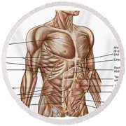 Anatomy Of Human Abdominal Muscles Round Beach Towel