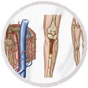 Anatomy Of Human Bone Marrow Round Beach Towel