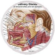 Anatomy Of Human Salivary Glands Round Beach Towel