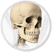 Anatomy Of Human Skull, Side View Round Beach Towel