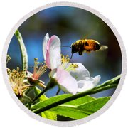 Apple Blossom And Honey Bee Round Beach Towel