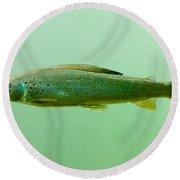 Arctic Grayling - Thymallus Arcticus - Underwater Round Beach Towel