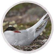 Arctic Tern In Its Nest Round Beach Towel