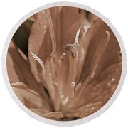 Asiatic Lily Named Red Twin Round Beach Towel