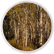 Aspen Forest In Fall Round Beach Towel