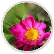 Aster From The Daylight Mix Round Beach Towel
