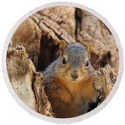 Baby Fox Squirrel Round Beach Towel