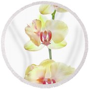 Backlit Orchids Against White Background Round Beach Towel
