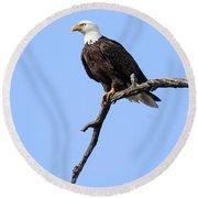 Bald Eagle 6 Round Beach Towel