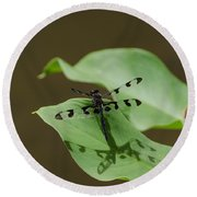 Banded Pennant Dragonfly Round Beach Towel