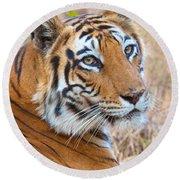 Bandhavgarh Tigeress Round Beach Towel